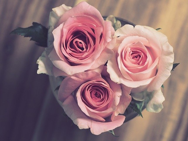 Quà tặng 20/10 hoa hồngac